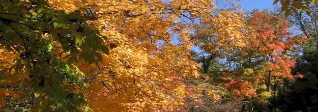fall10r.jpg
