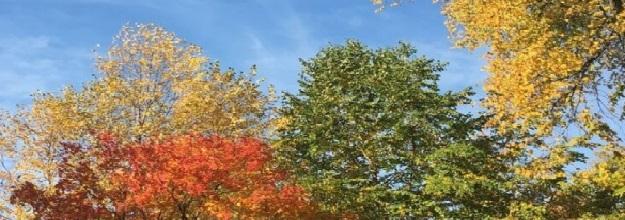 treesr.jpg